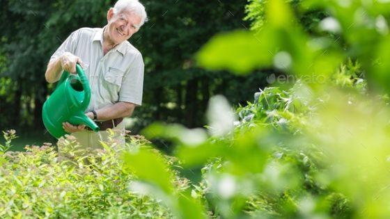 Elderly man taking care of the garden